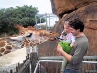 Открытый зоопарк в Паттайе жираф