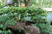 дерево увитое змеями во Вьетнаме Парк Янг Бей