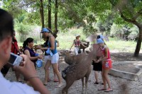 кормление оленей во Вьетнаме Парк Янг Бей