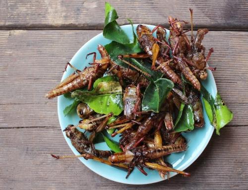 Тараканы, саранча, скорпионы и прочая вкуснятина