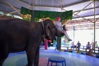 представление слонов во Вьетнаме Парк Янг Бей